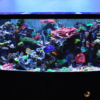 Blue Earth Display Tank