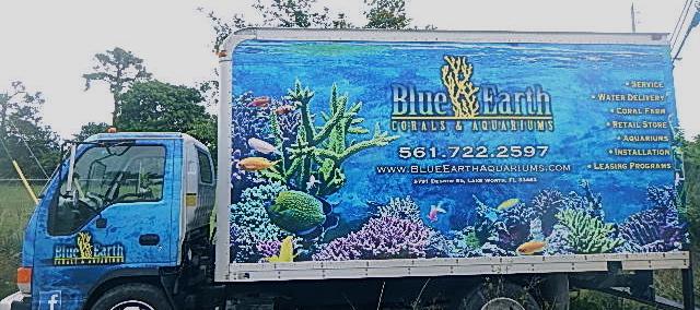 Blue Earth Corals And Aquariums West Palm Beach Aquarium