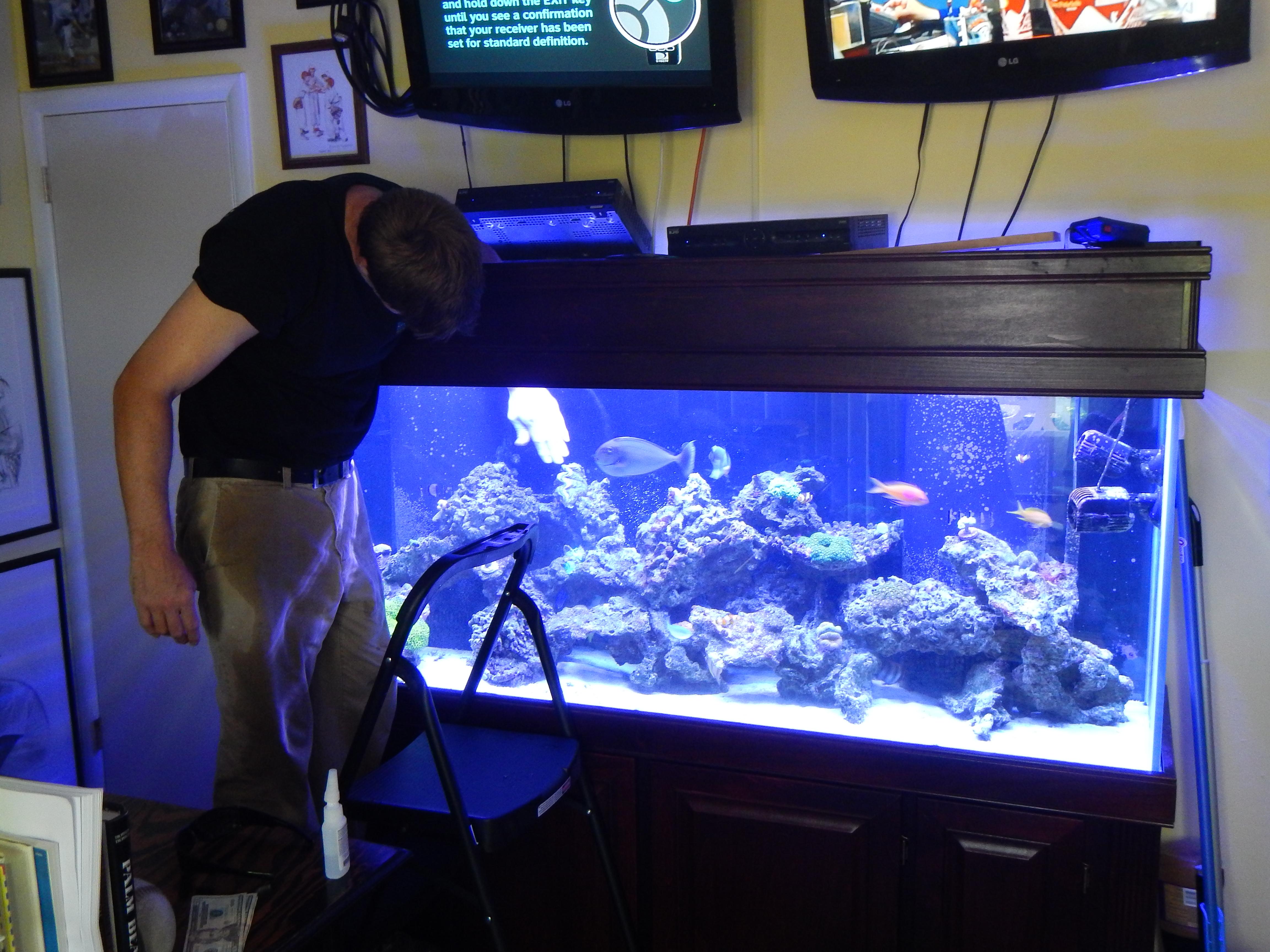 Fish Tank Maintenance Service Help Fish Tank Cleaning Aquarium
