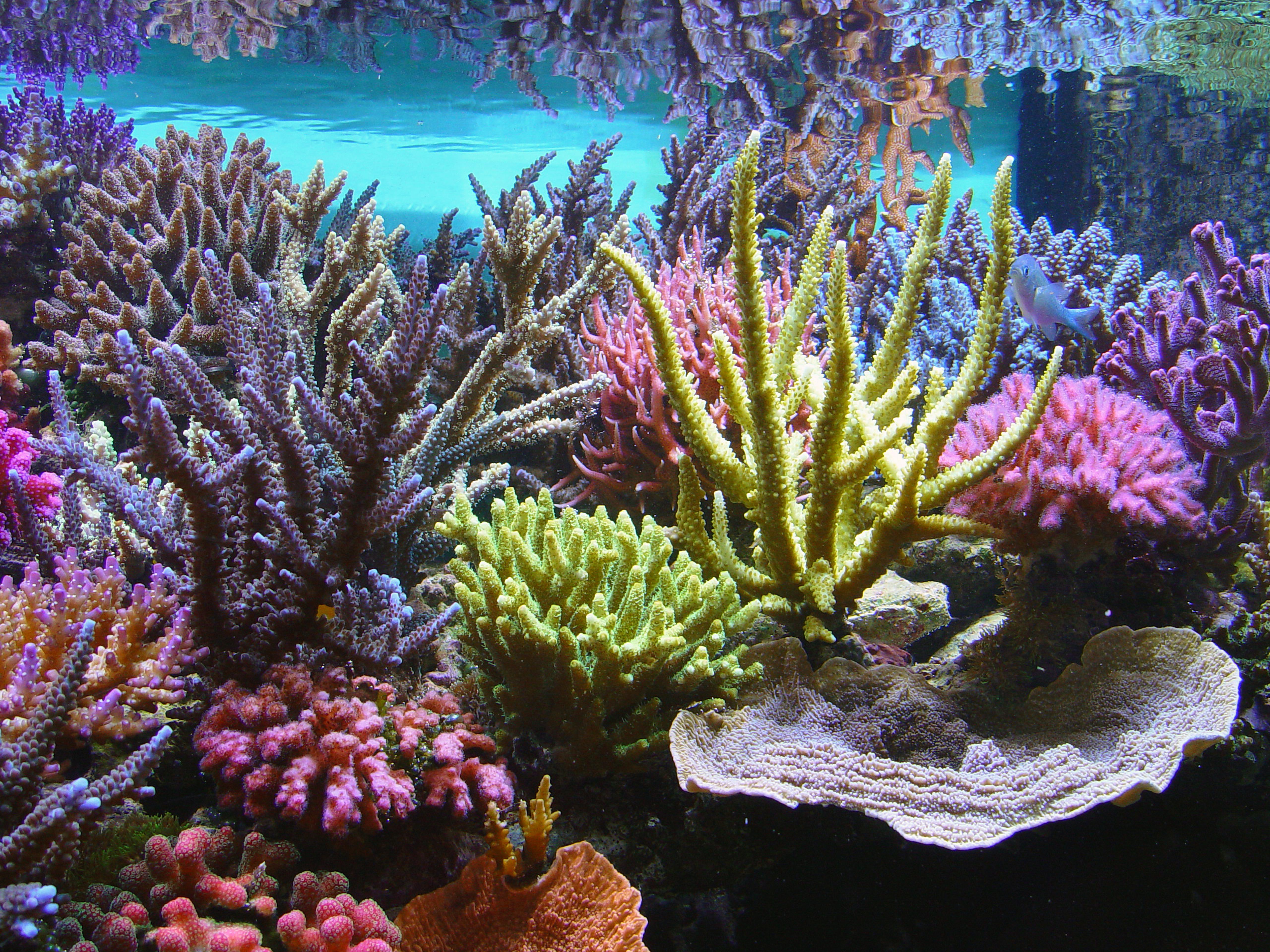 Aquarium Service West Palm Beach Fl Blue Earth Aquariums