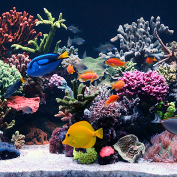 How To Get Optimal Filtration For Your Marine Aquarium