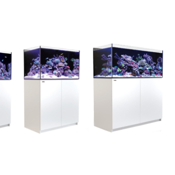 Reef Aquarims What Size Tank Is Best For You