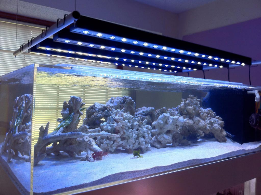 Understanding Marine Aquarium Lighting Blue Earth Aquariums